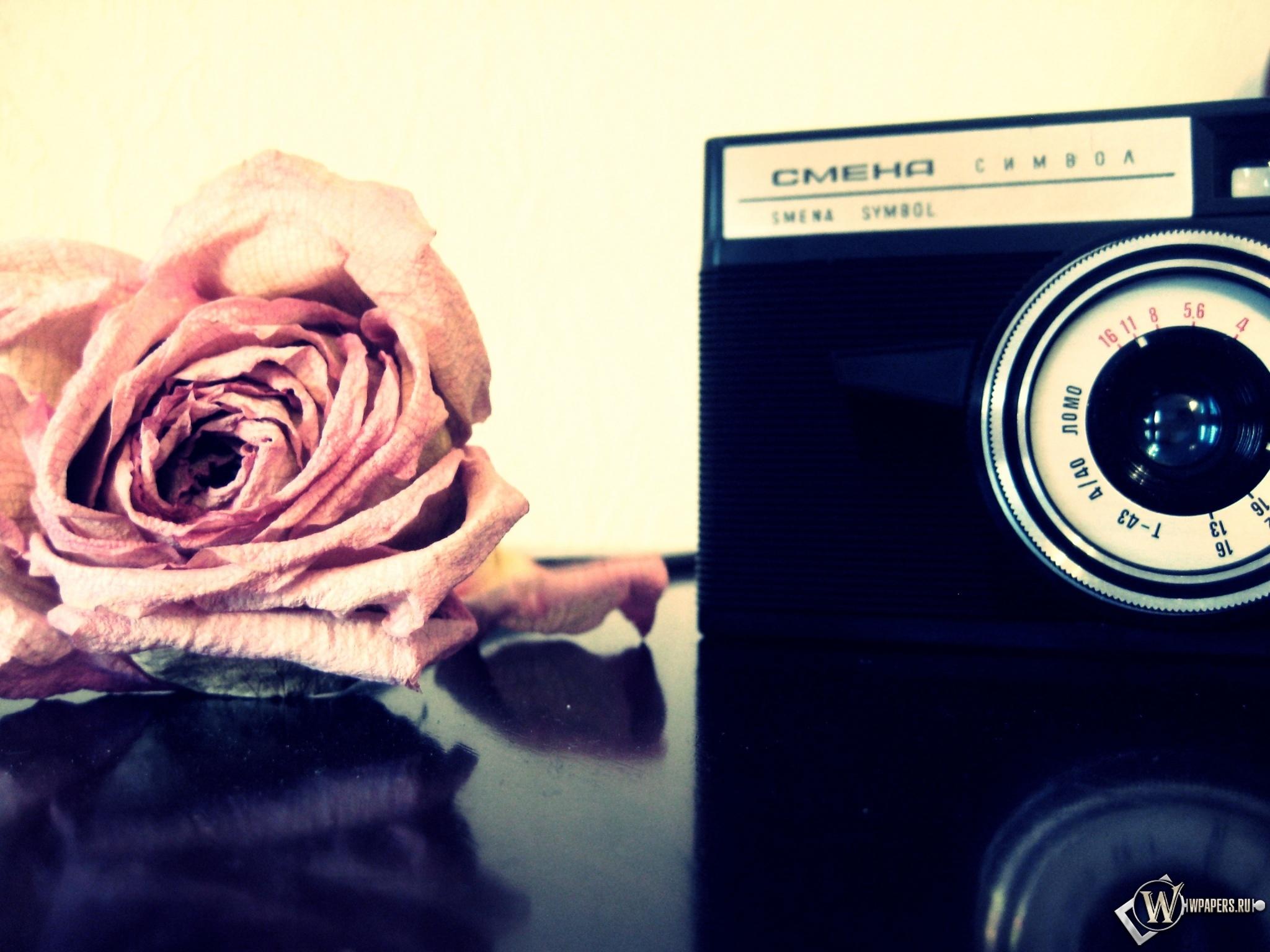 Роза и фотоаппарат 2048x1536