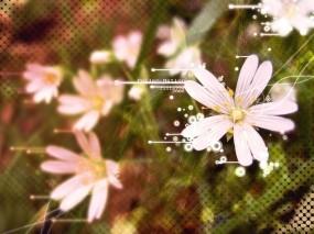 Обои Белые цветы: Цветок, Сетка, Обработка, Цветы