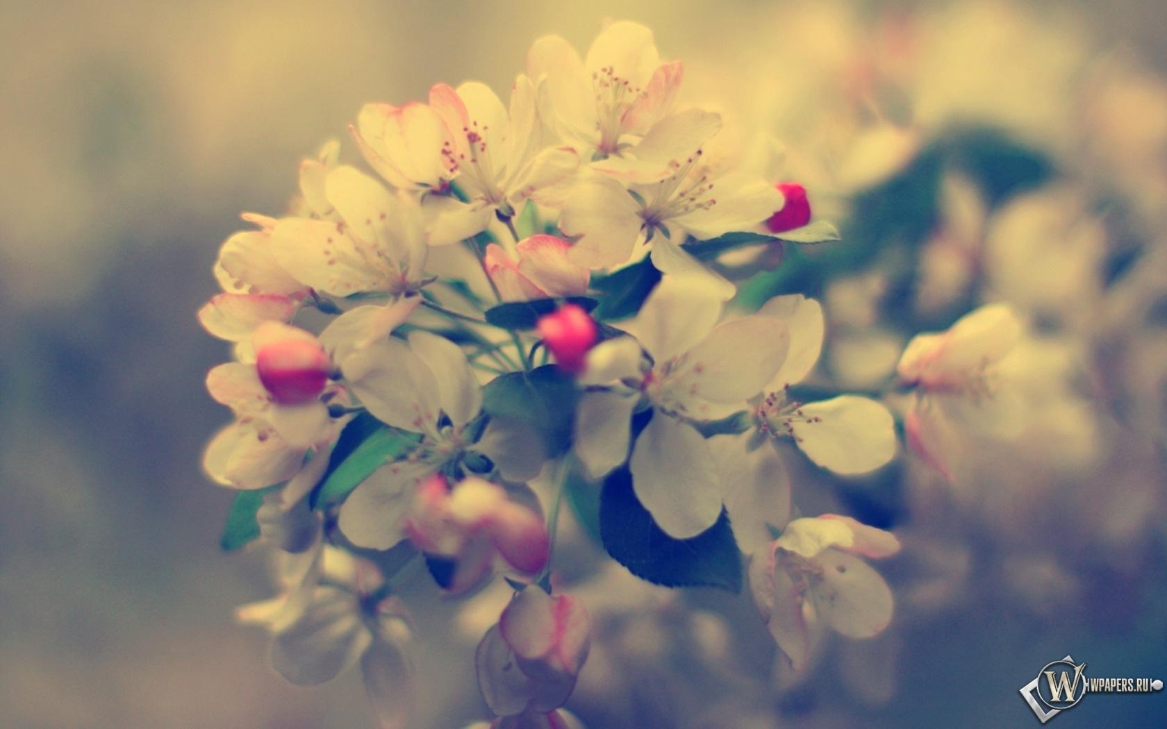 Весенние цветы 1680x1050