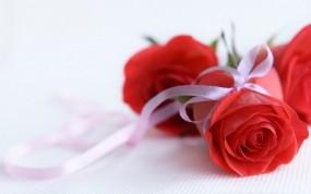 Обои Красные розы: Роза, Белый, Подарок, Лента, Красная, Бутон, Цветы