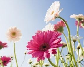 Обои Луговые цветы: Солнце, Цветок, Небо, Луг, Цветы