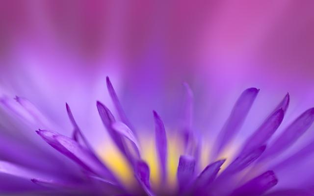 Цветок в приближении