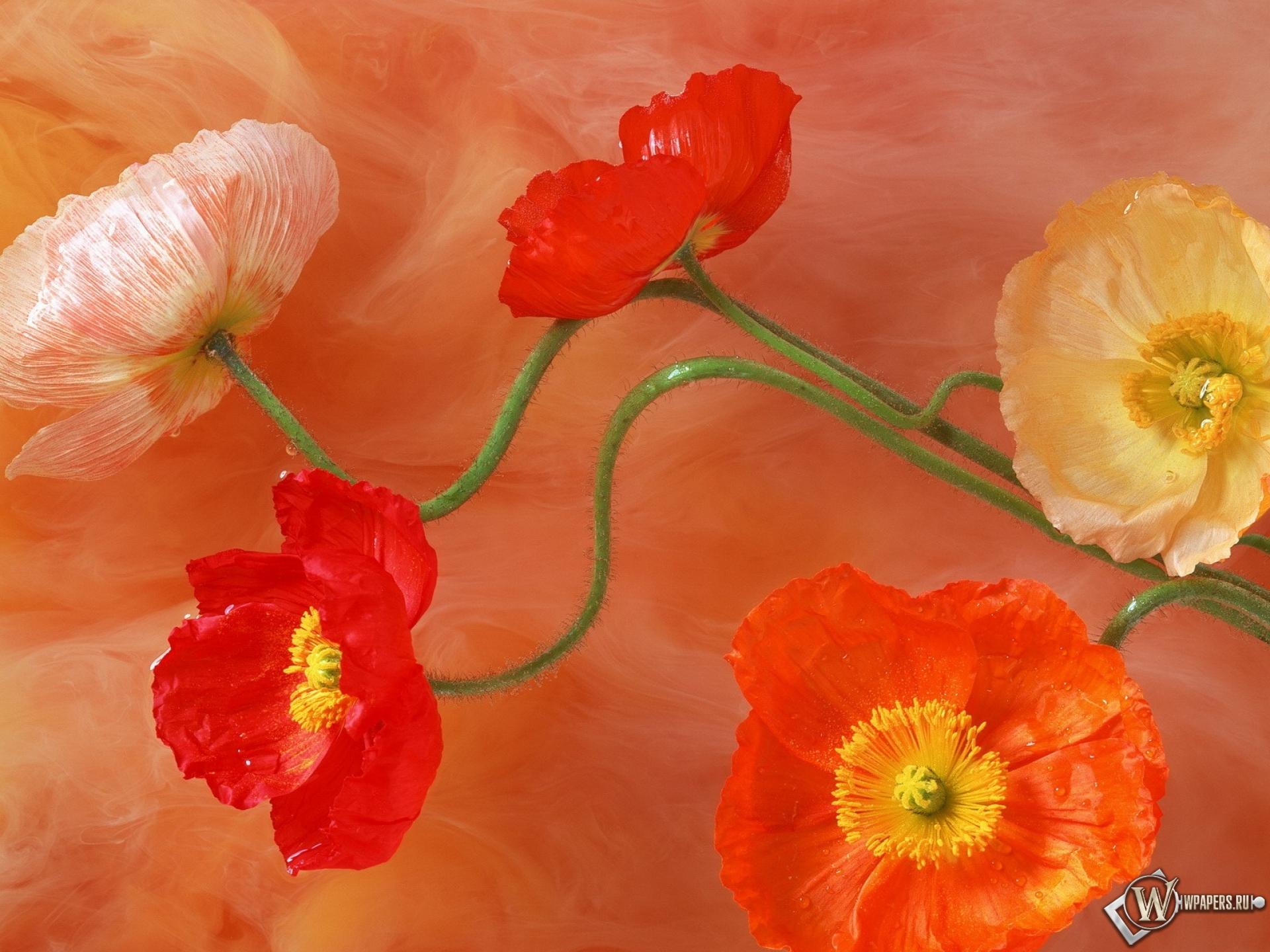 Ищете красивые бесплатные картинки цветы. Вы найдёте их на этом сайте