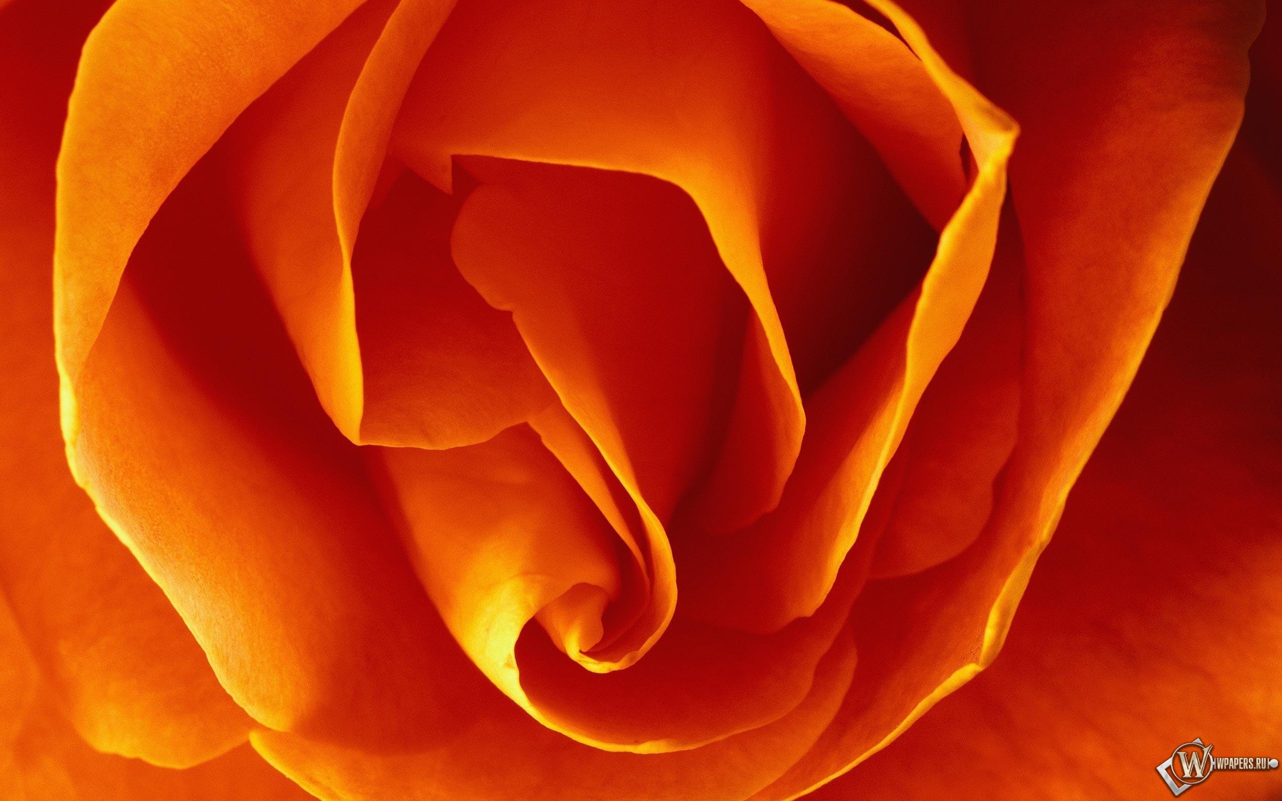 Бутон оранжевой розы 2560x1600