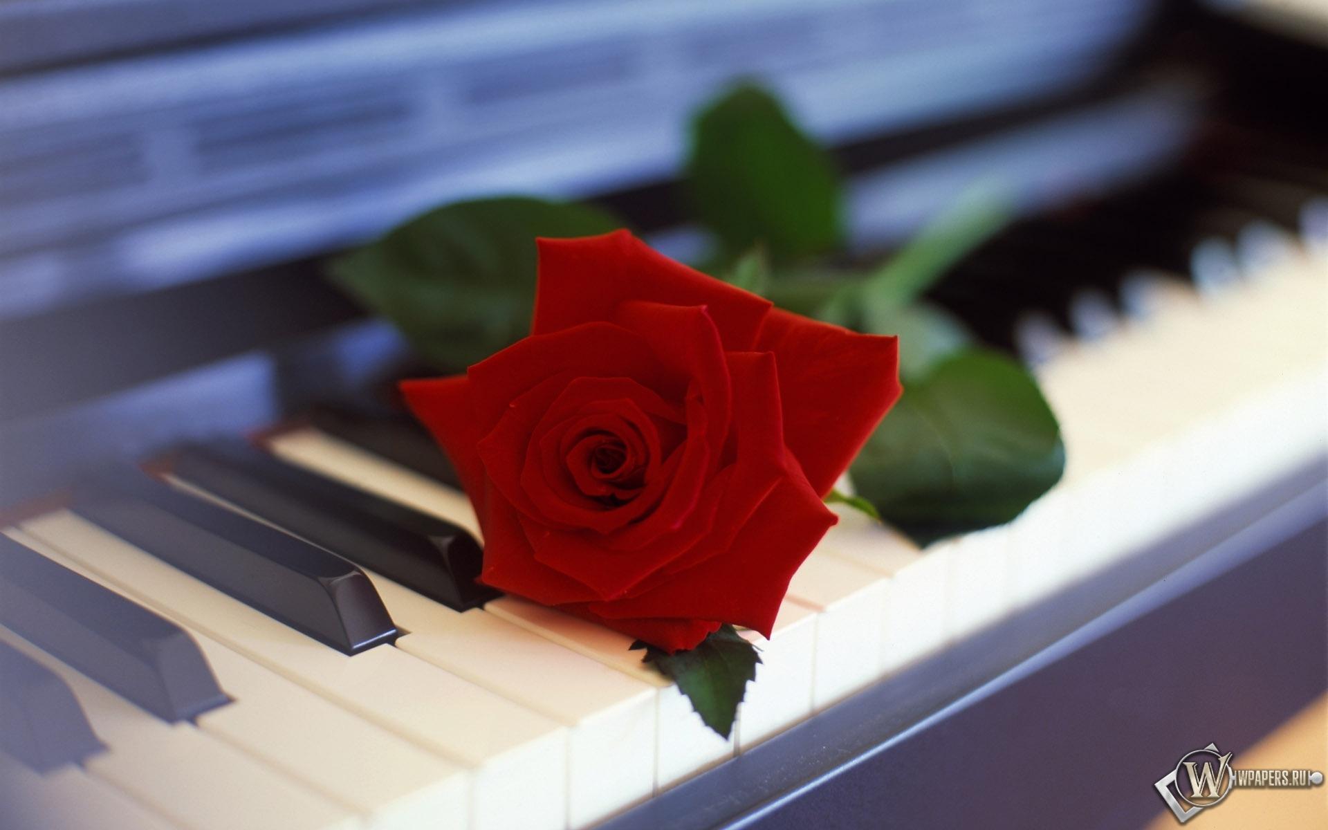 Роза на пианино 1920x1200