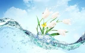 Обои Ледяные подснежники: Лёд, Цветы, Бабочка, Цветы