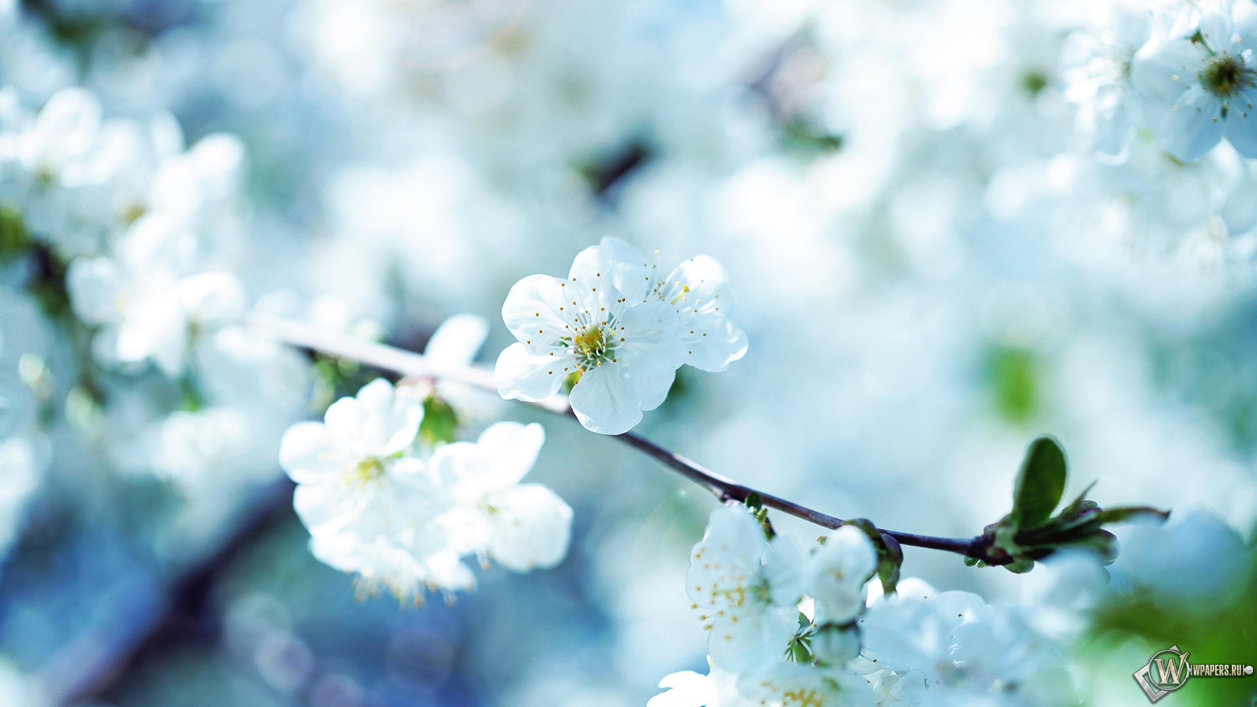Обои весенние цветы на рабочий стол с
