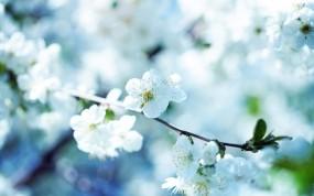Обои Весенние цветы: Цветок, Фото, Макро, Весна, Цветы
