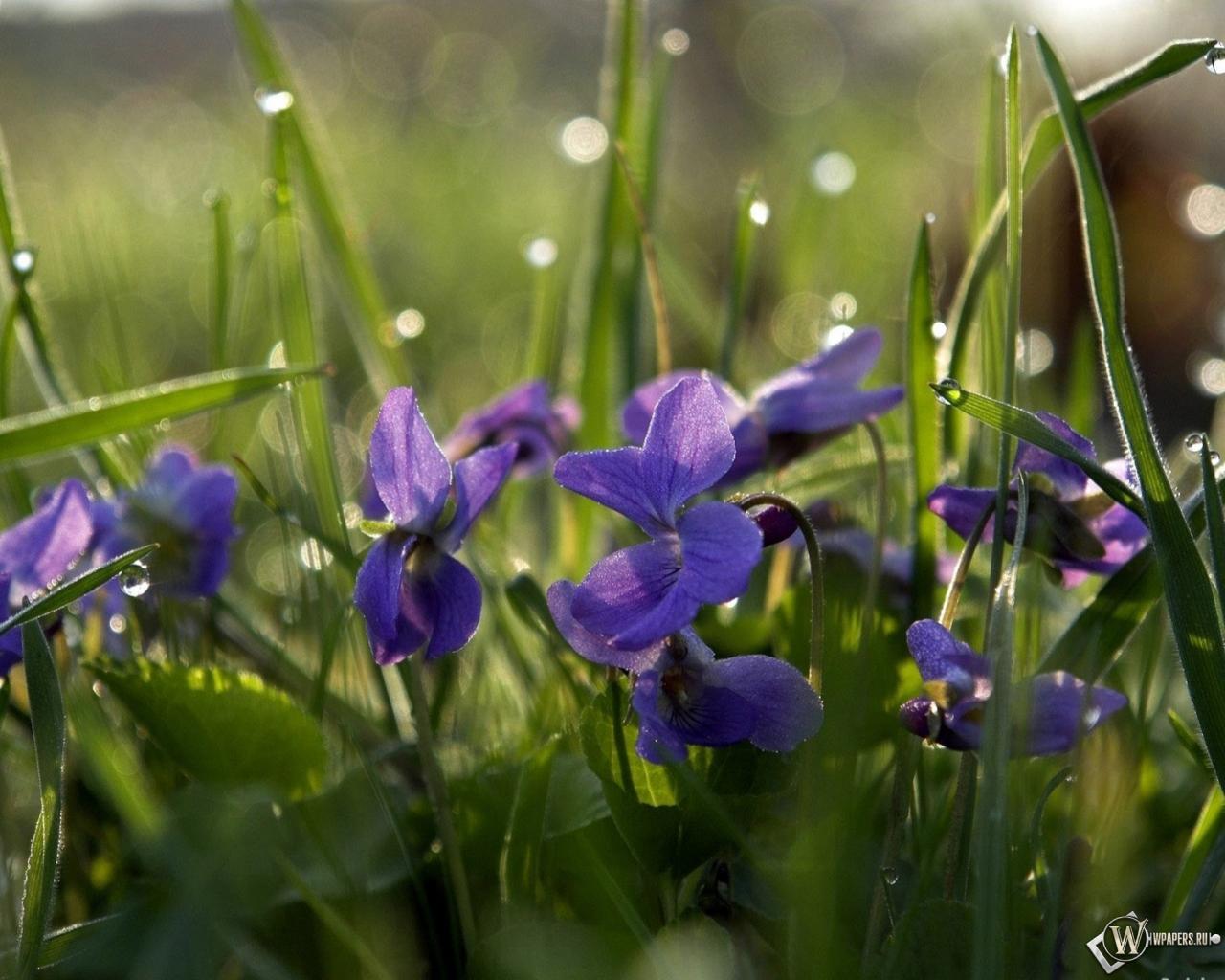 Обои цветы дождя дождь поле цветы