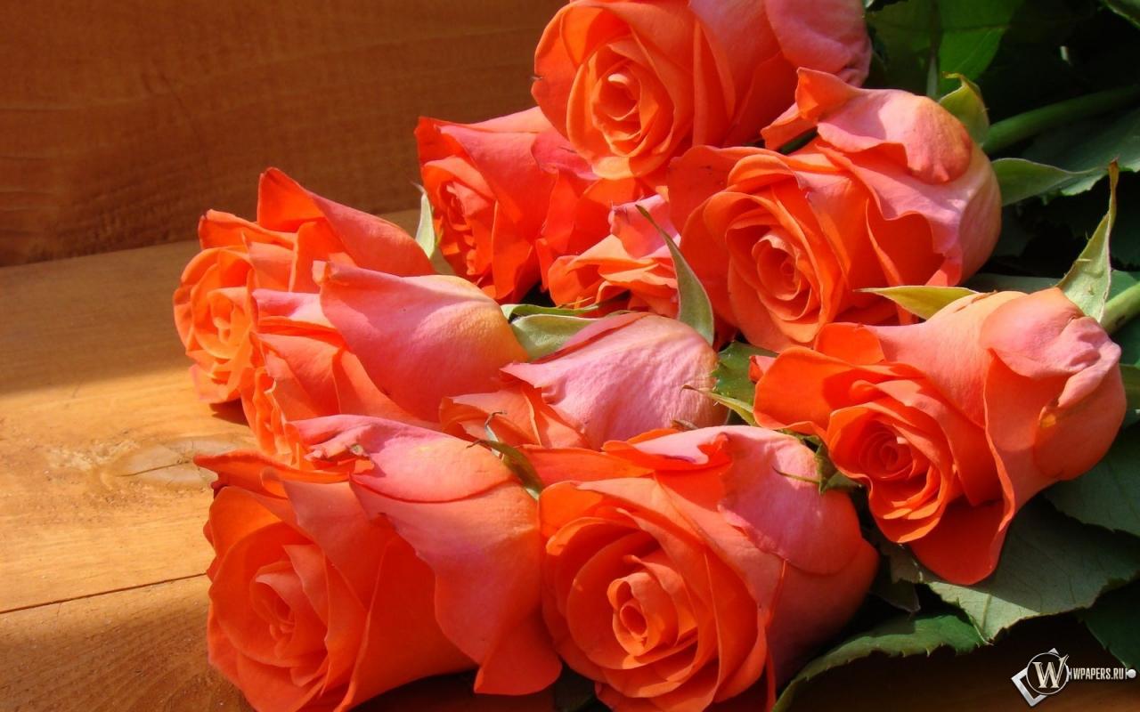 http://wpapers.ru/wallpapers/Plants/Flowers/14169/1280x800_�����-���.jpg