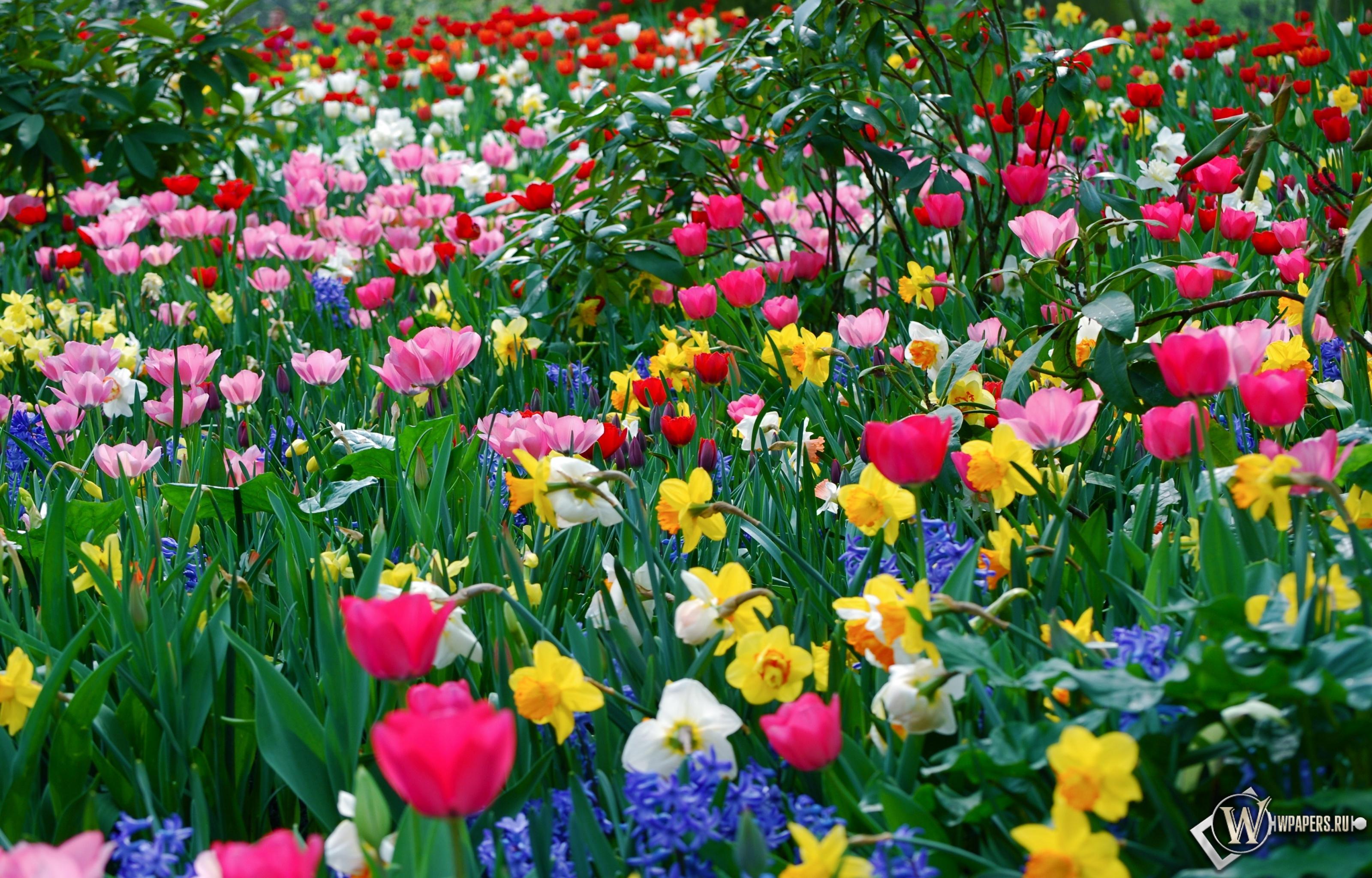 Цветущее великолепие 3200x2048
