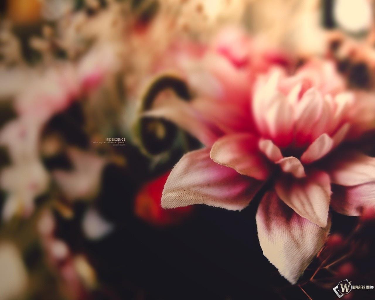 Розовый цветок 1280x1024