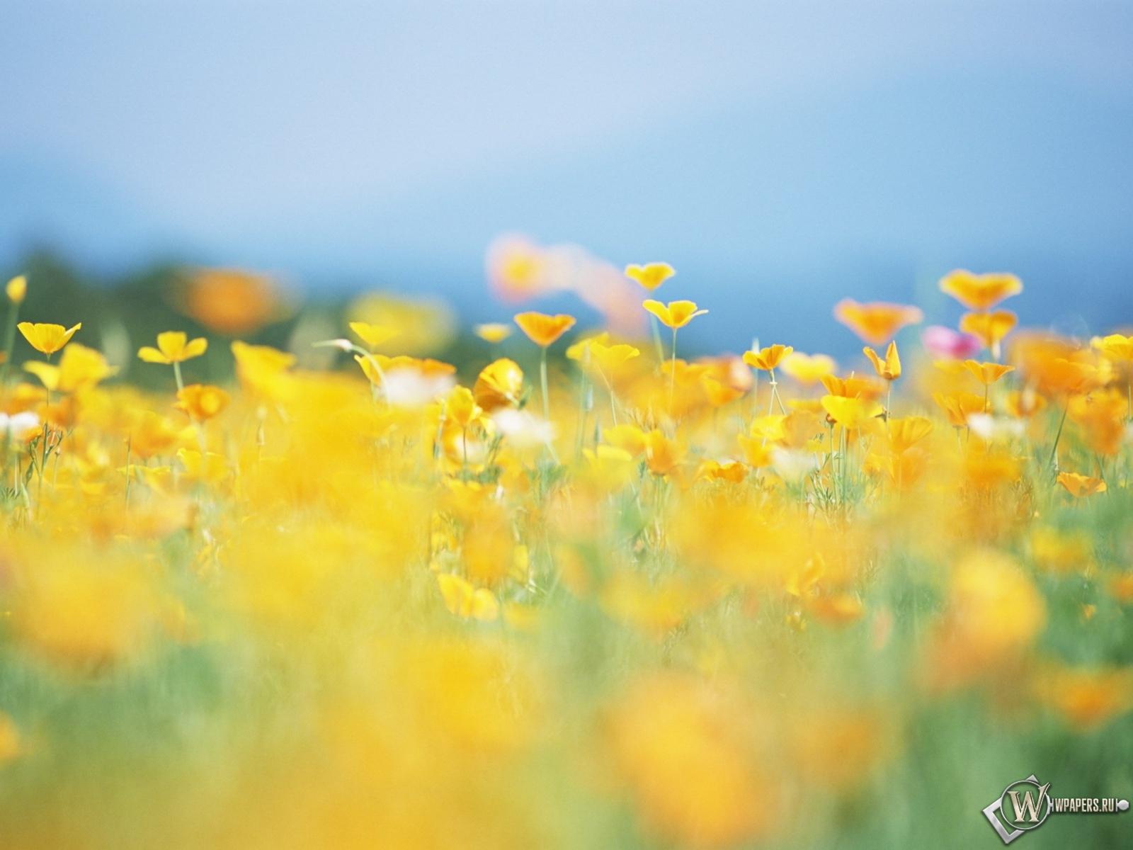 Жёлтая поляна 1600x1200