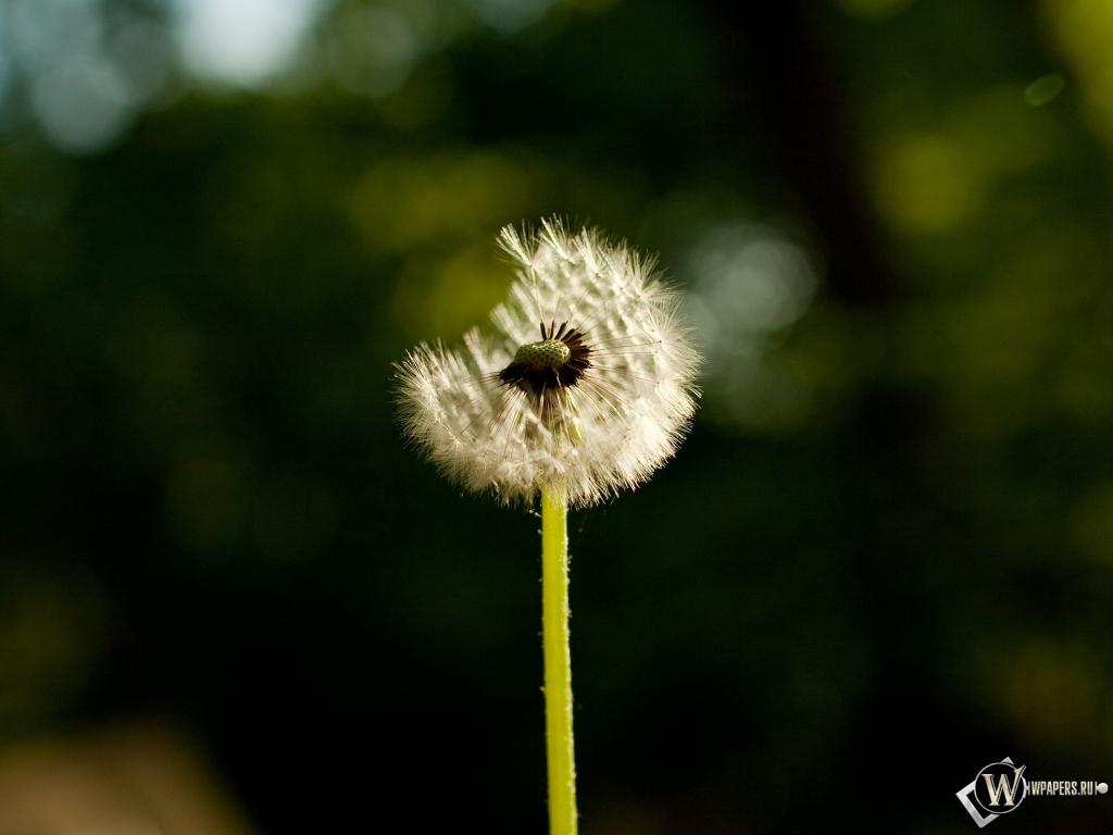 фотообои flutter: