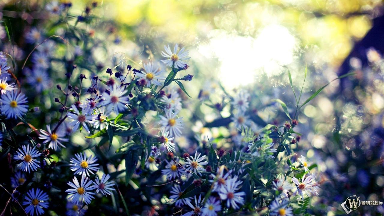 Обои весенние цветы цветы листья