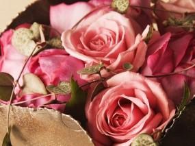 Обои Розы: Розы, Букет, Цветы