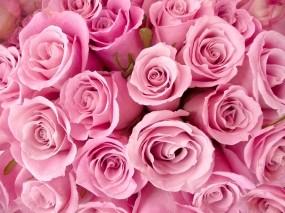 Обои Букет роз: Цветы, Розы, Букет, Цветы