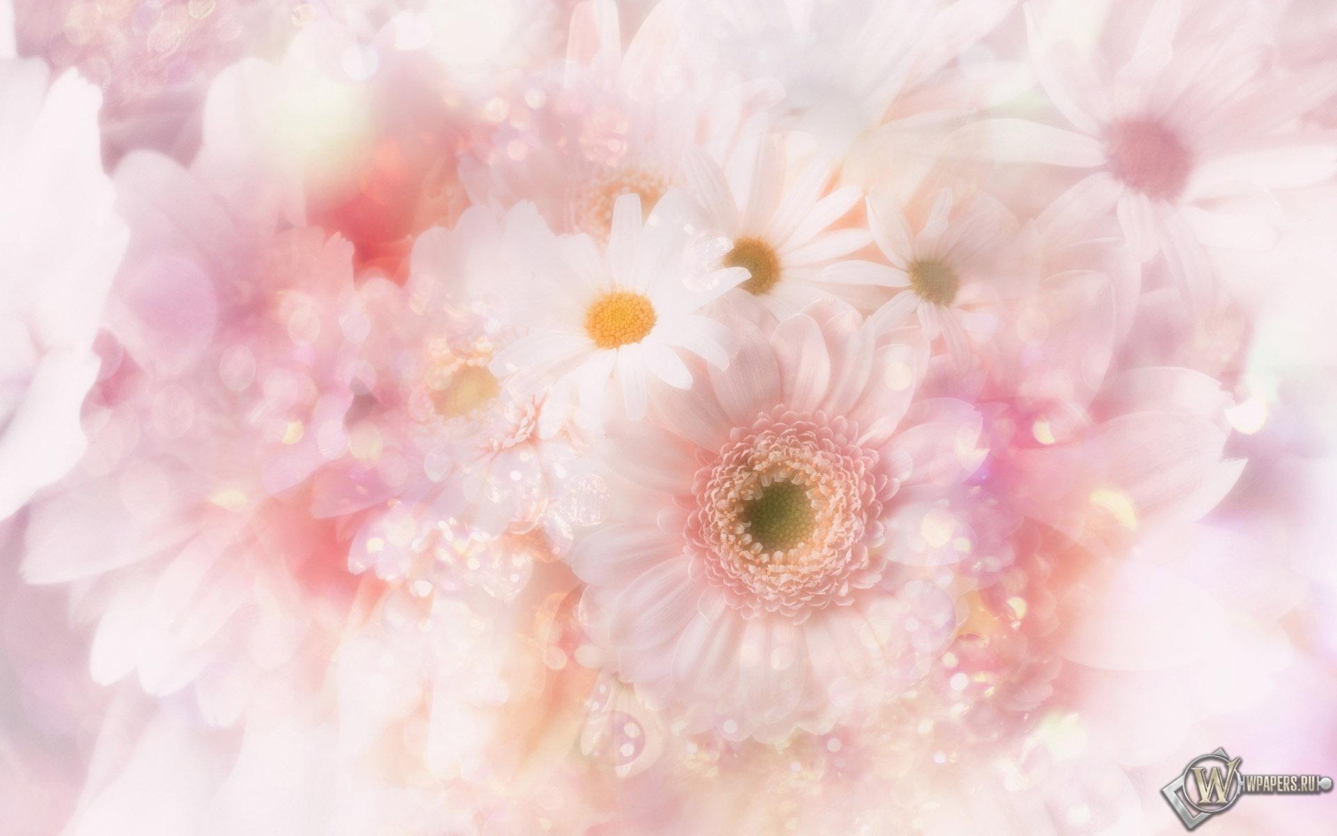 Белые цветы 1920x1200