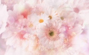 Обои Белые цветы: Белый, Цветы, Цветы