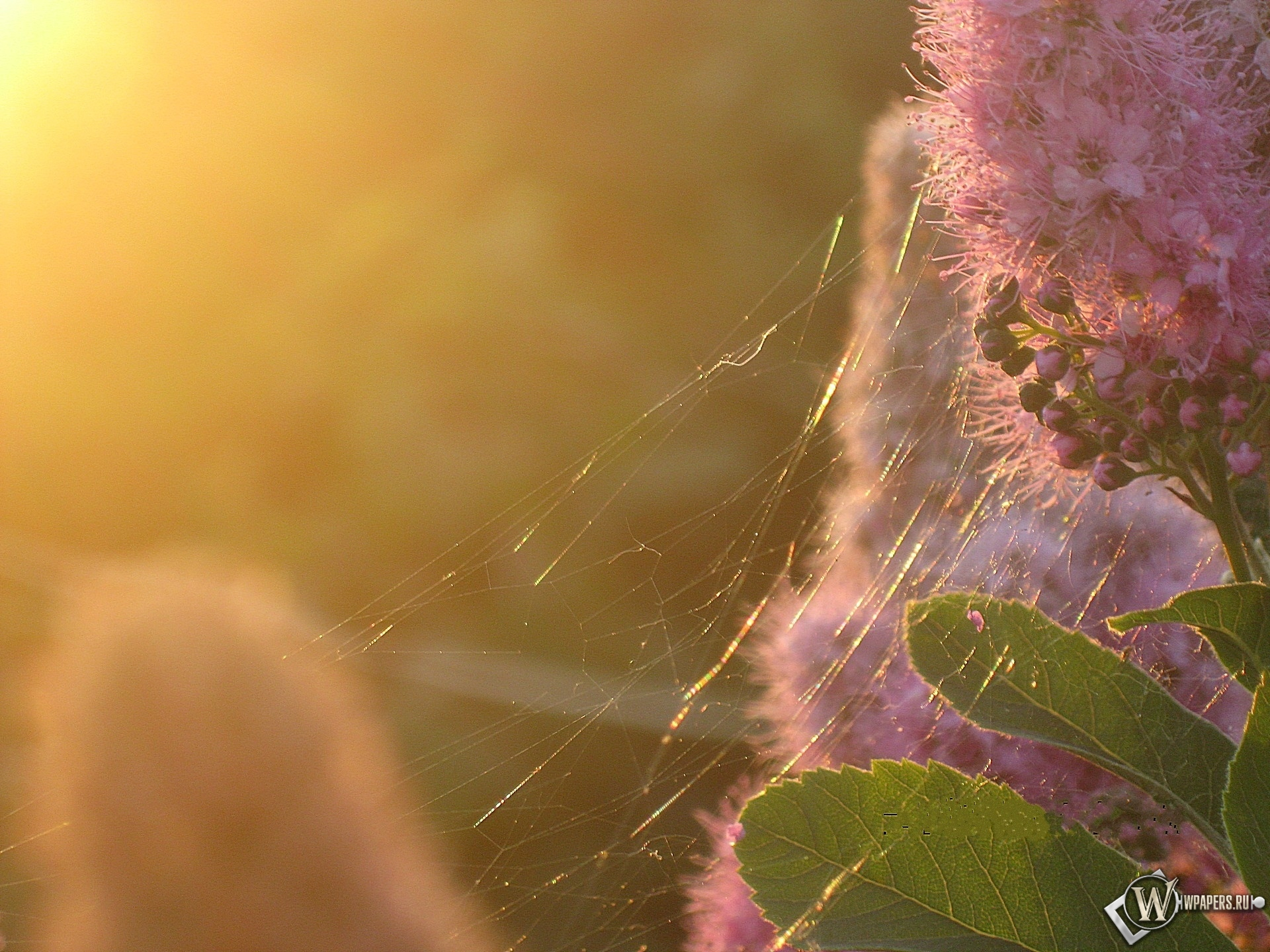 Золотая паутина 1920x1440