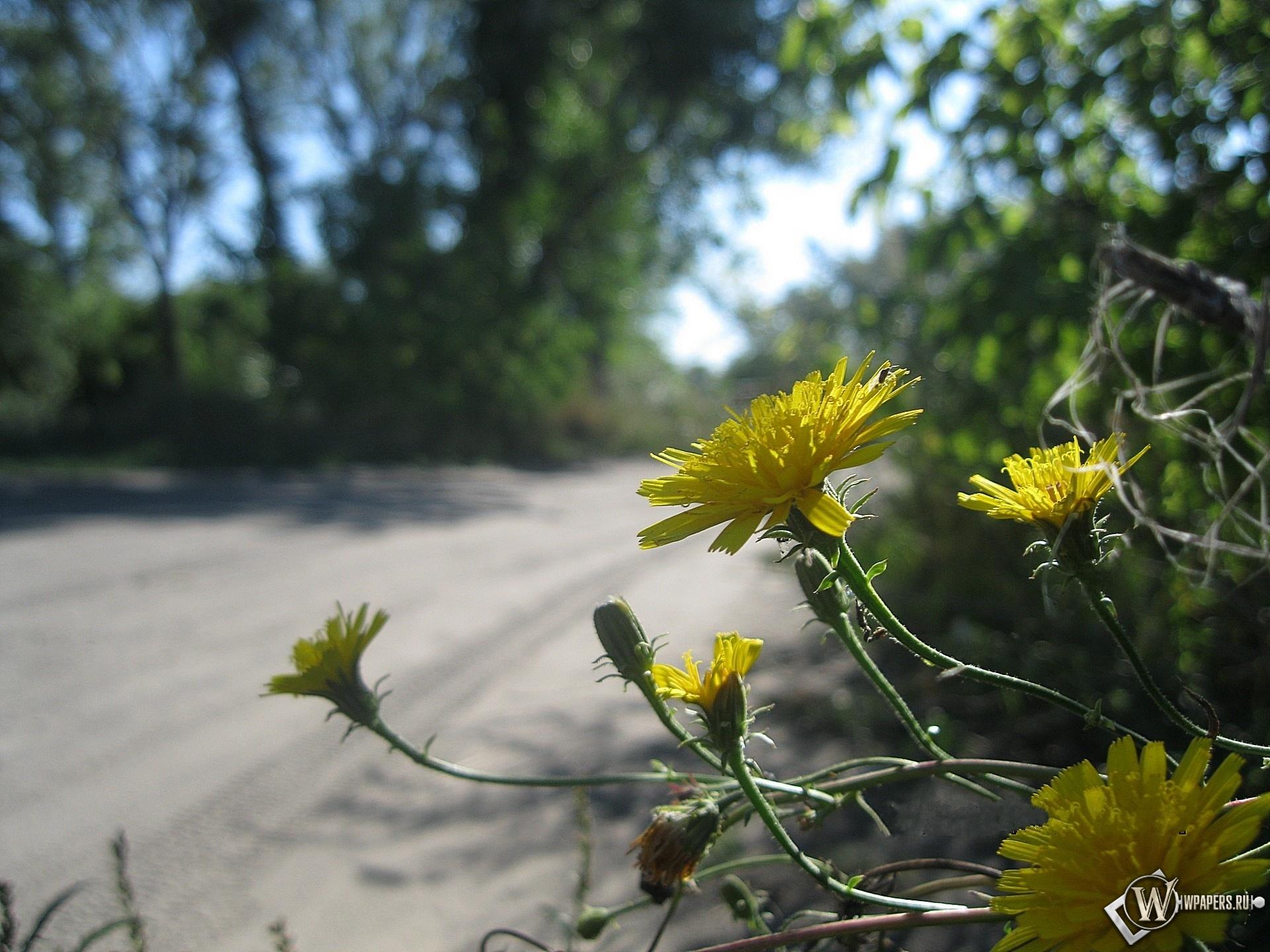 Цветы у дороги 1920x1440