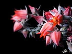 Алые цветы