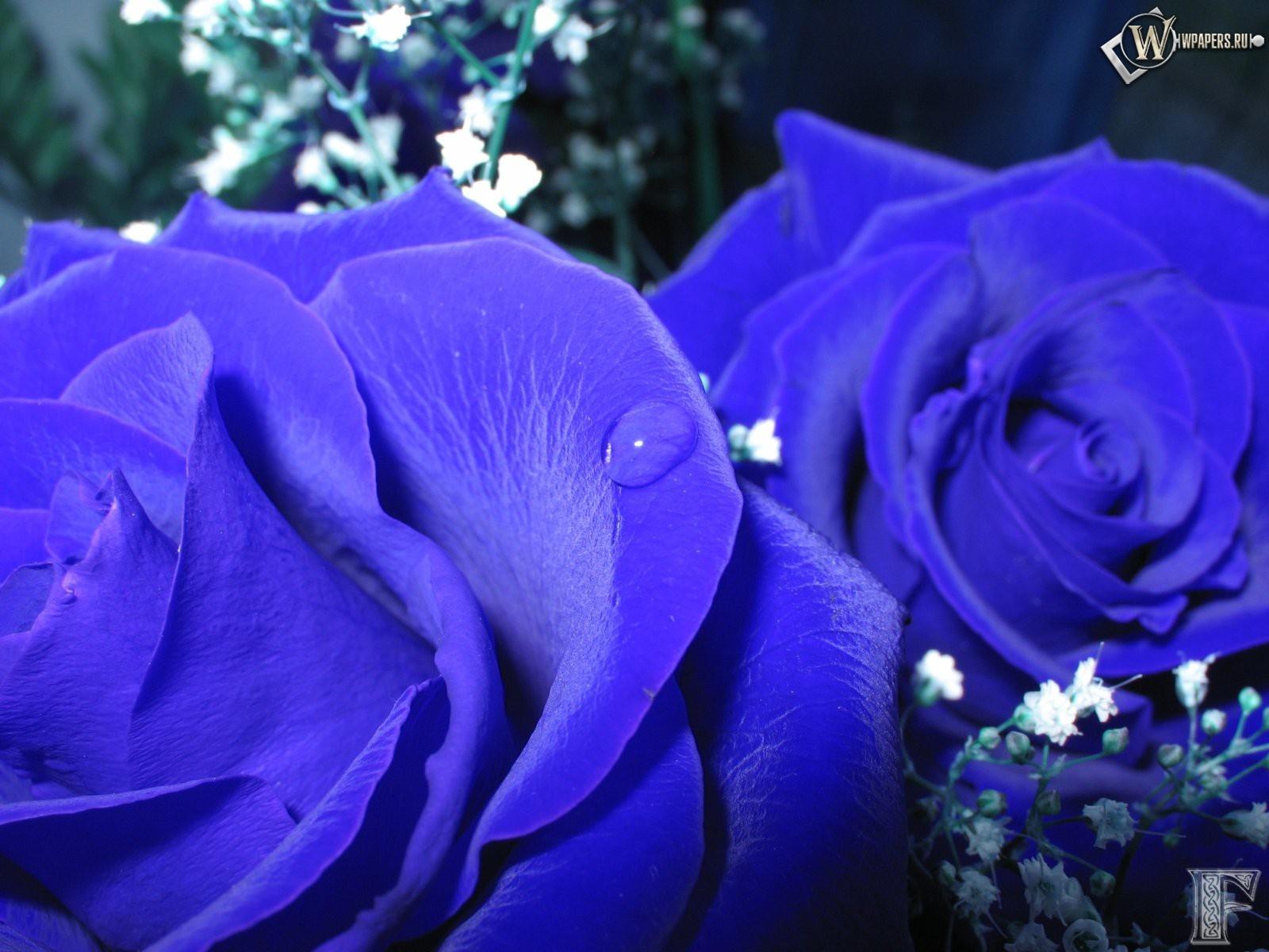 Синие розы 1600x1200