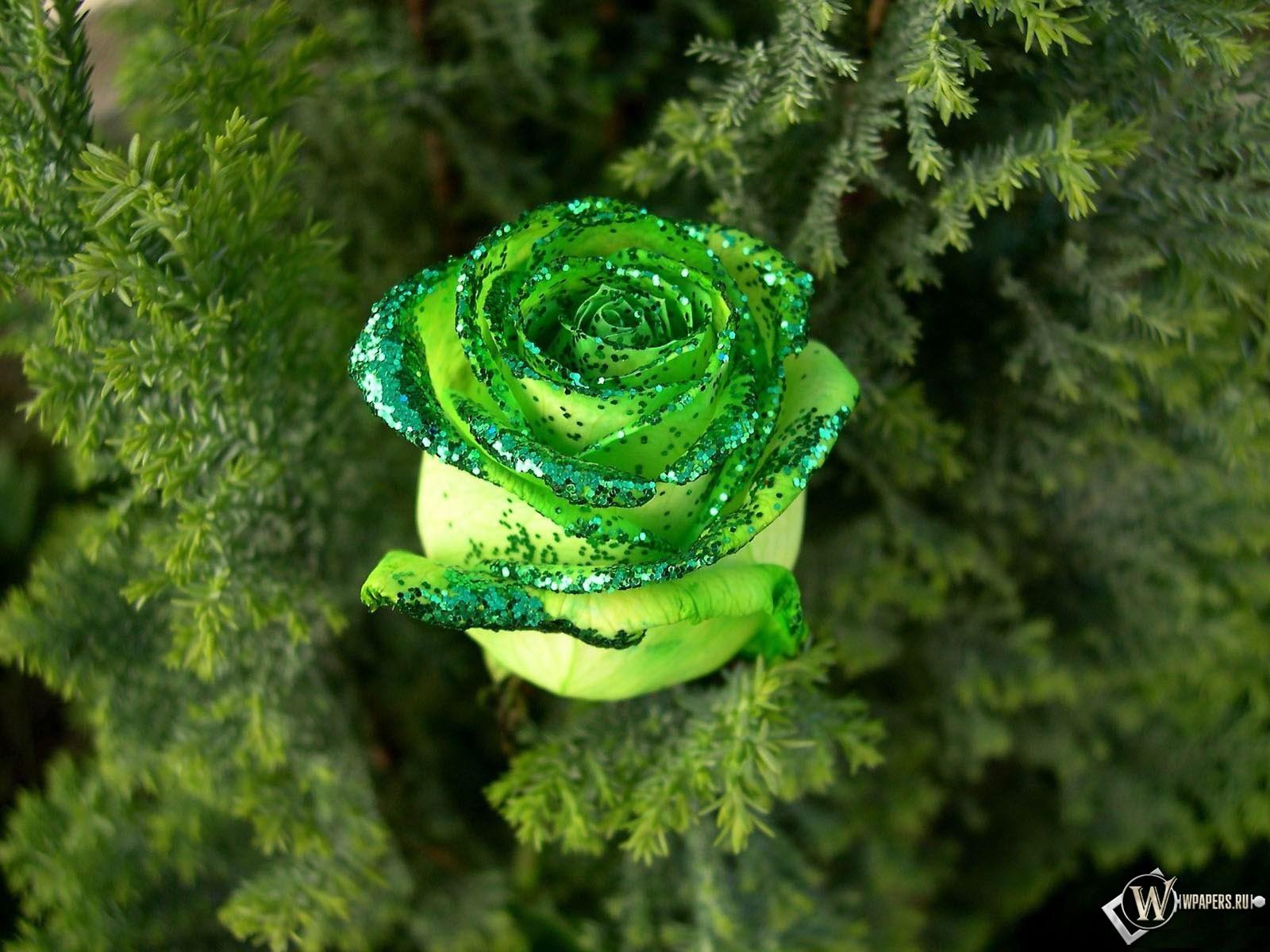 Зеленая роза 1600x1200