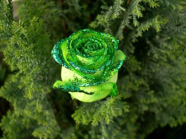 Зеленая роза