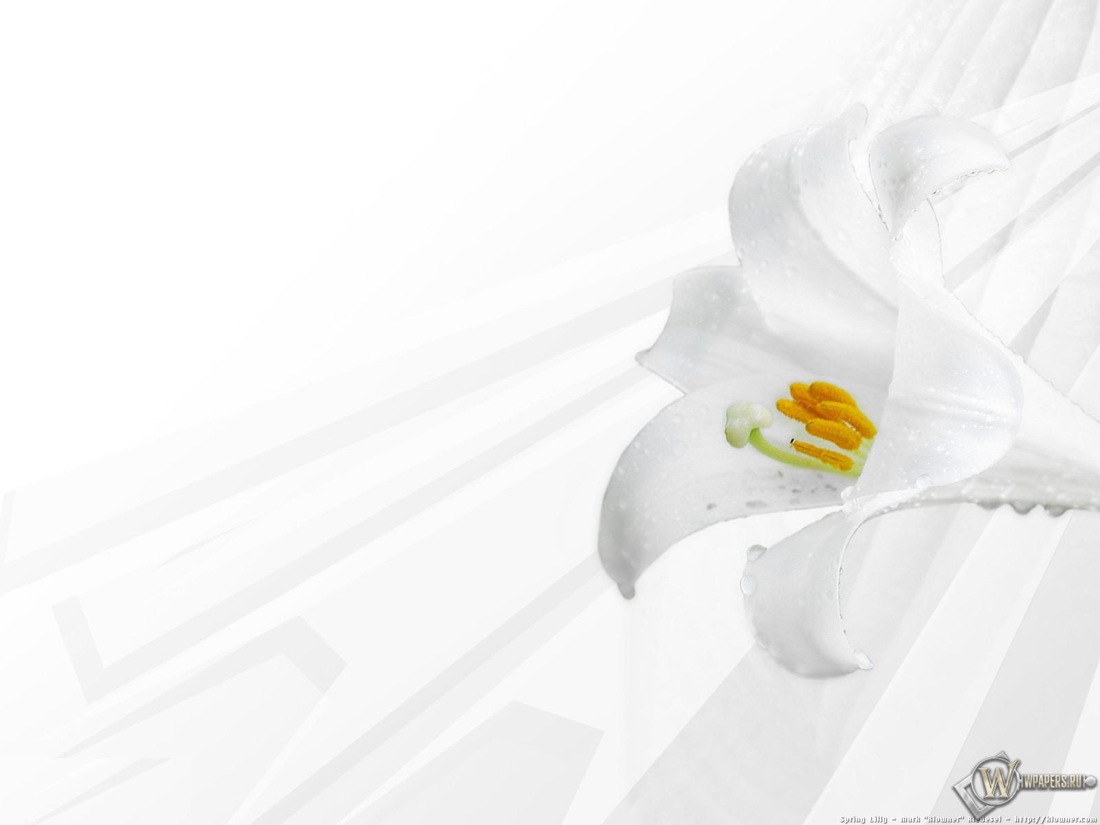 Белая лилия 1600x1200