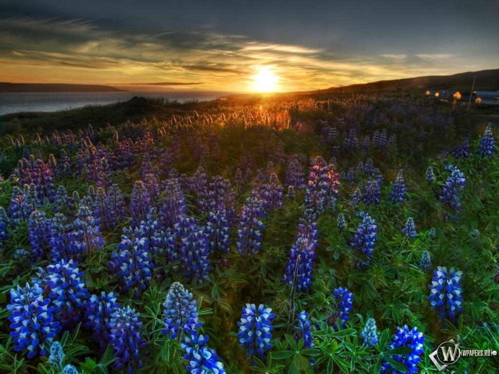 Поле поле цветы 1024x768 картинки