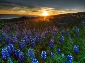 Обои Цветочное поле: Поле, Цветы, Цветы