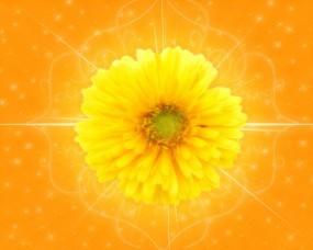 Обои Желтый цветок: Цветок, Цветы
