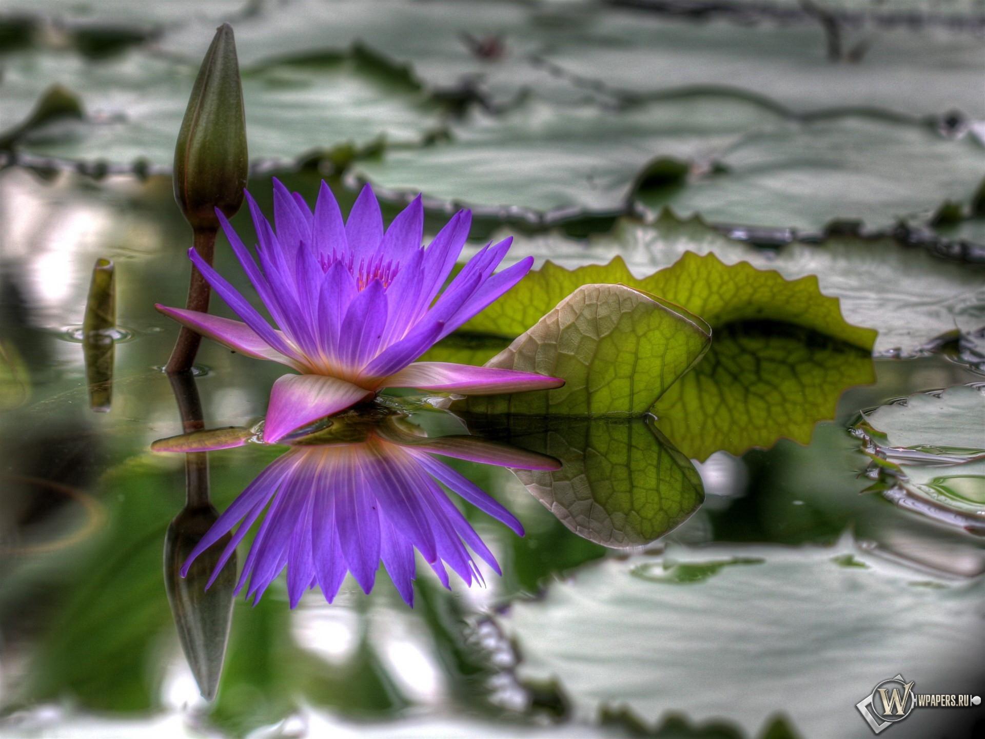 Цветок на болоте 1920x1440