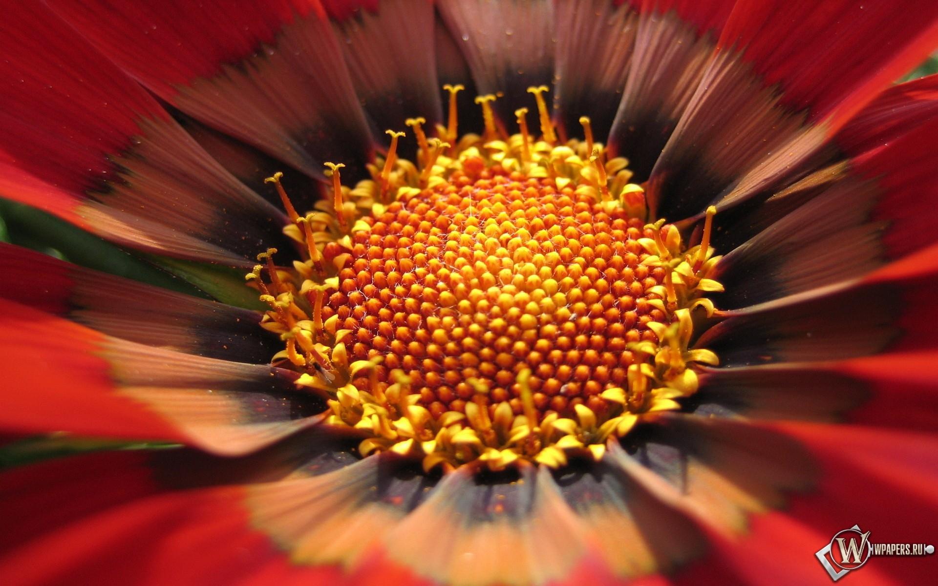 Цветок 1920x1200