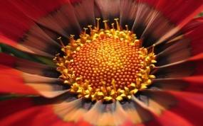 Обои Цветок: Цветок, Лепестки, Макро, Цветы