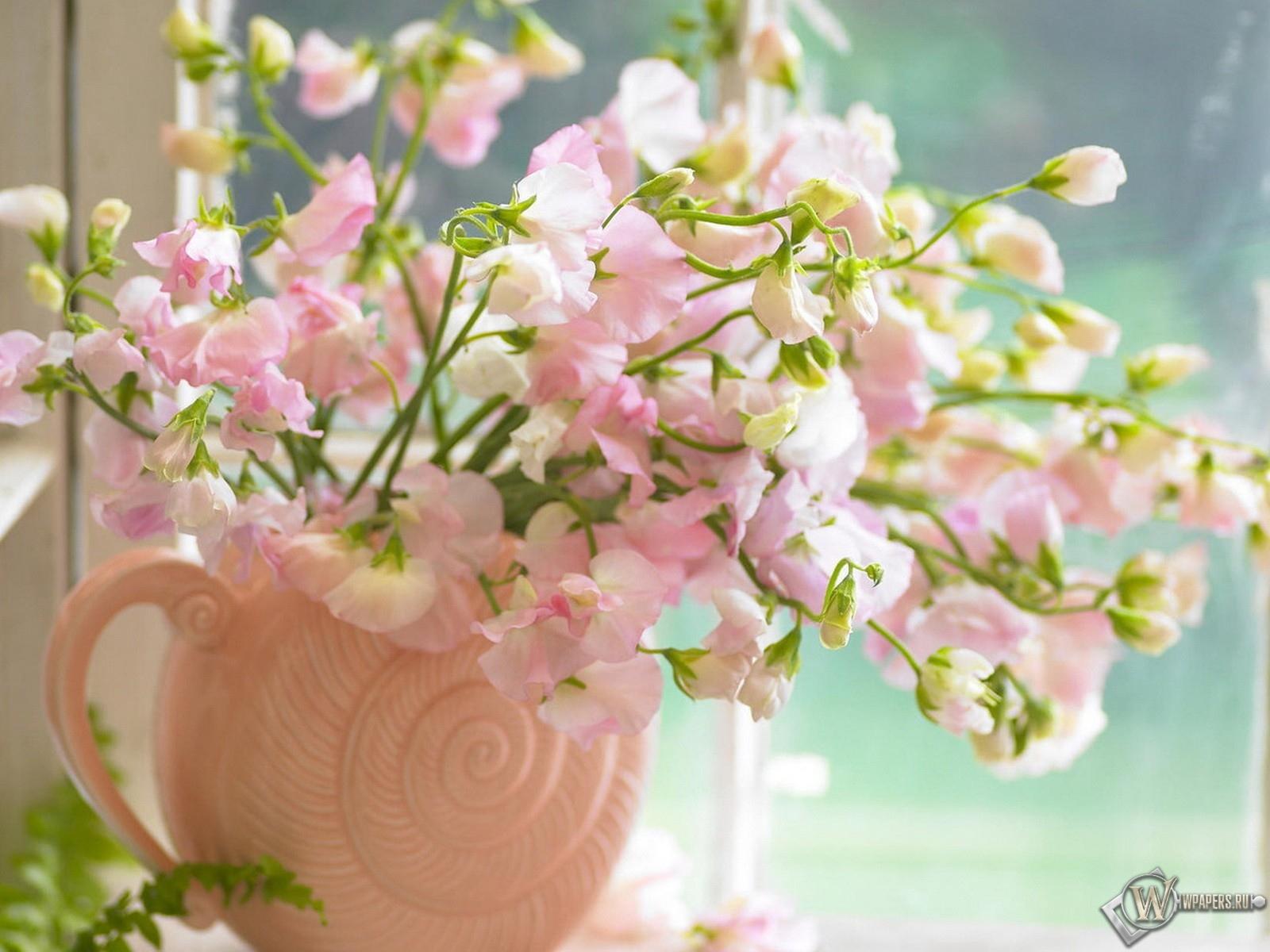 Цветы на окне окно обоев 22 цветы обоев