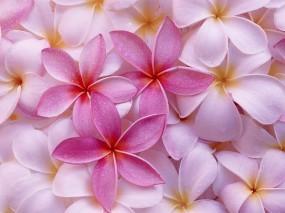 Обои Лепестки цветов: Лепестки, Цветы, Розовый, Цветы