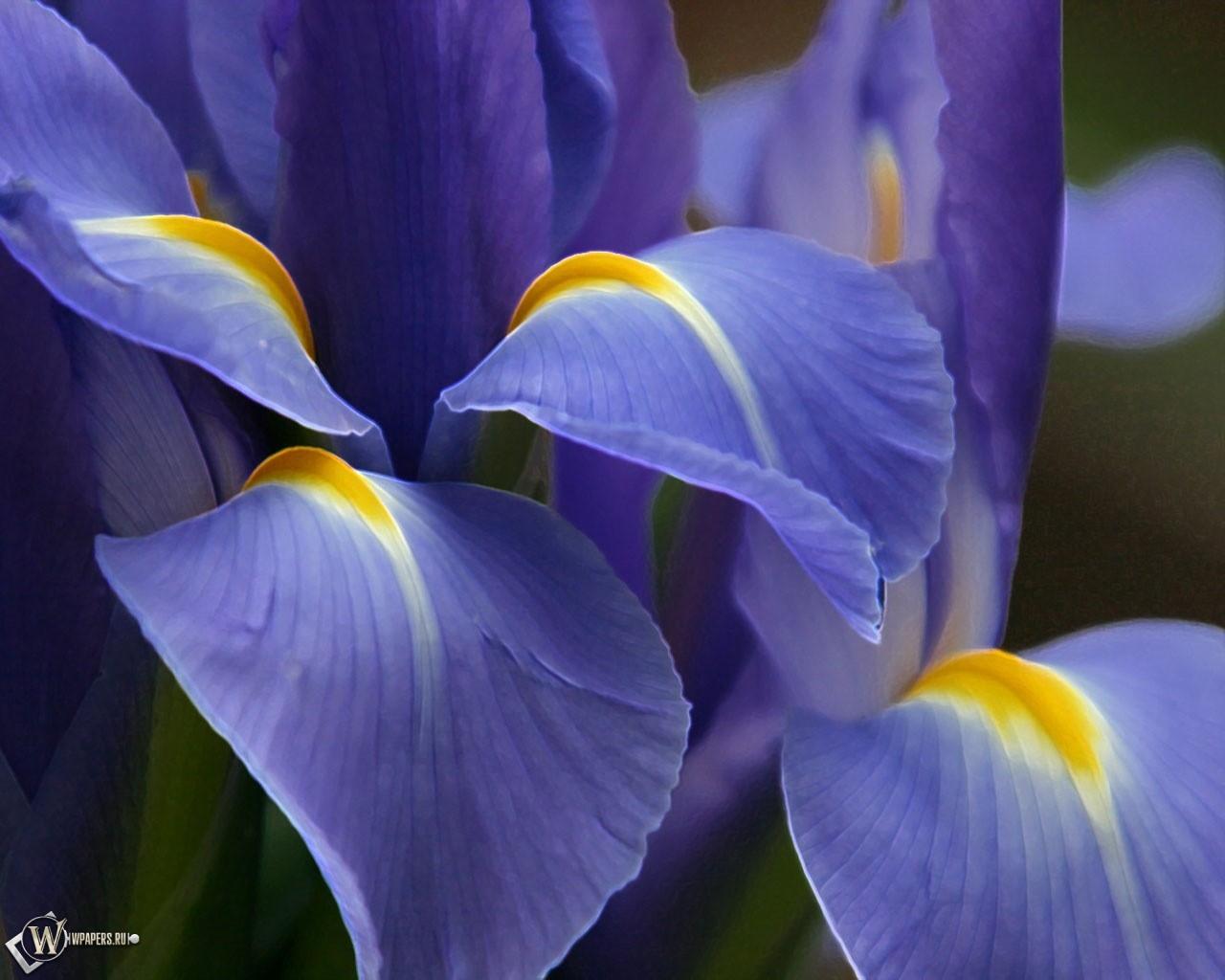 Фиолетовый цветок 1280x1024