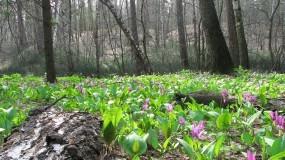 Обои Цветочная поляна: Лес, Цветы, Поляна, Цветы