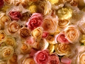 Обои Желтые розы: Розы, Желтый, Rose, Цветы
