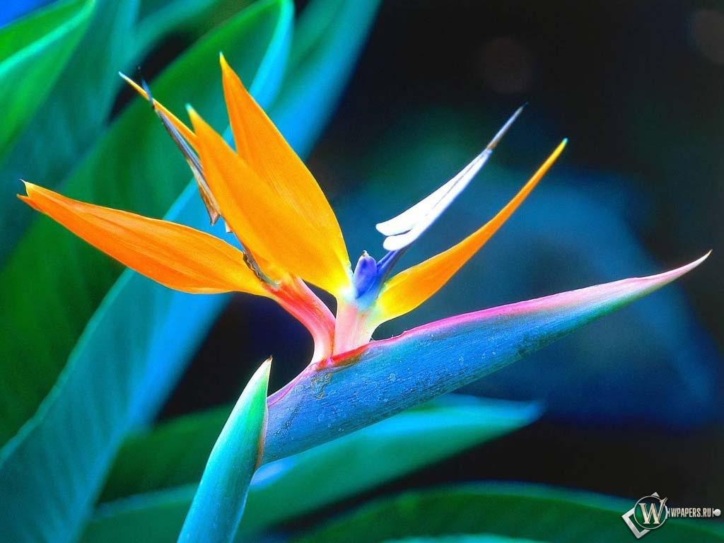 цветок 1024x768