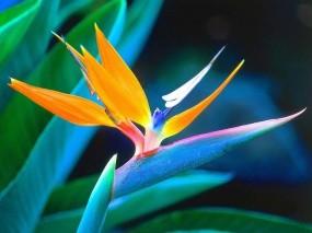 Обои цветок: Цветок, Цветы