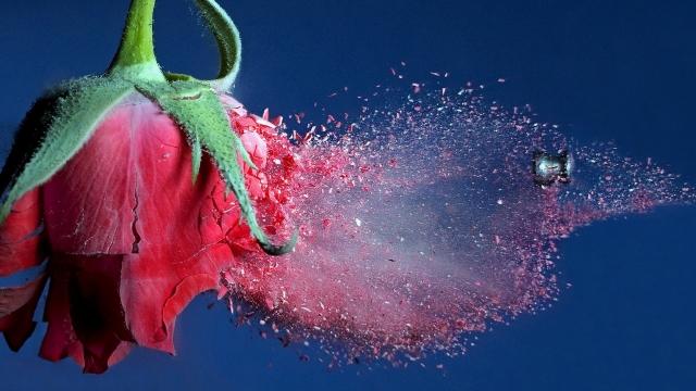 выстрел в замороженную розу
