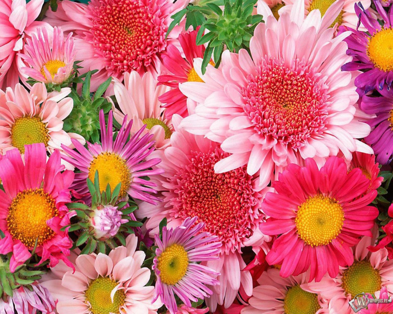 Обои цветы цветы 1280x1024 картинки