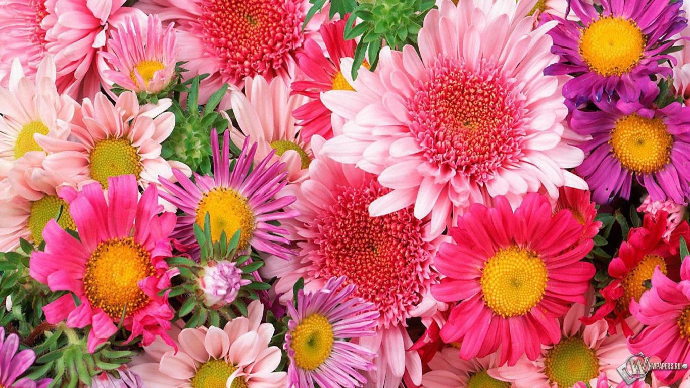 Обои цветы цветы 1366x768 картинки