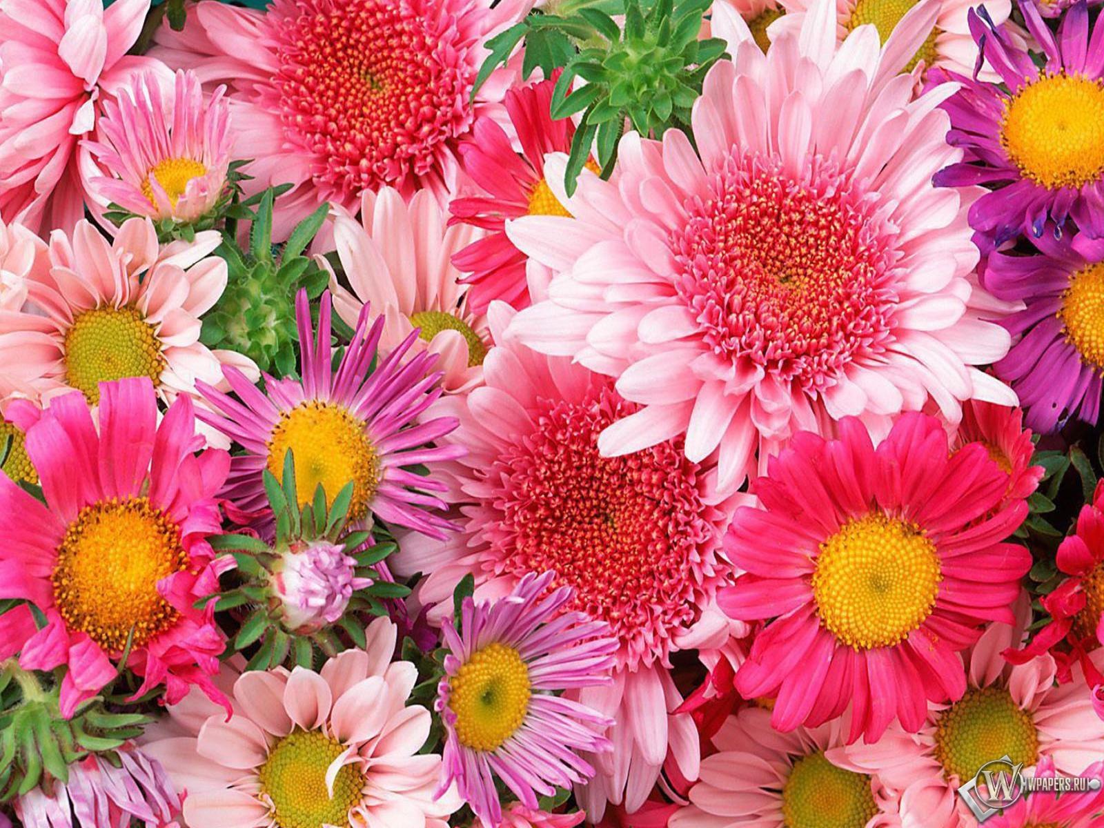 Обои цветы цветы 1600x1200 картинки