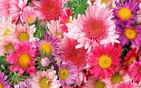 Обои Цветы: Цветы, Цветы