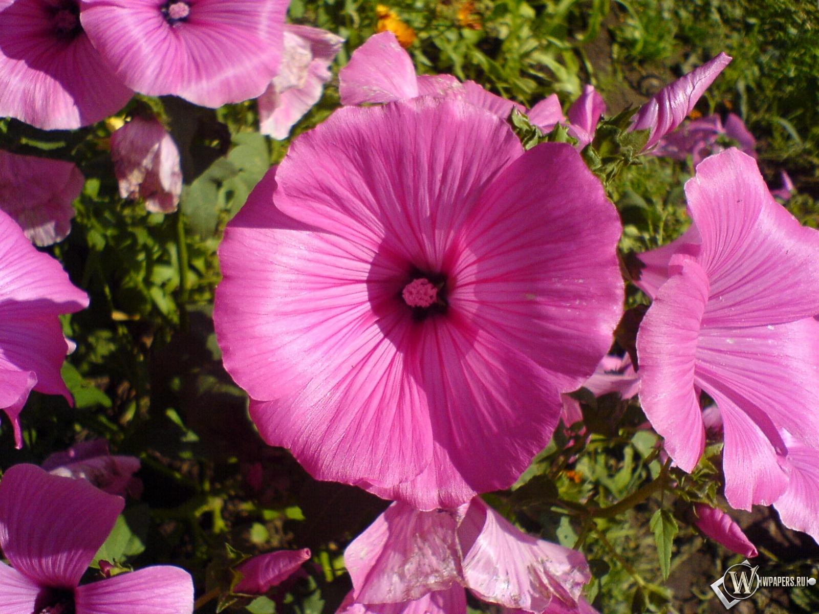 Цветок 1600x1200