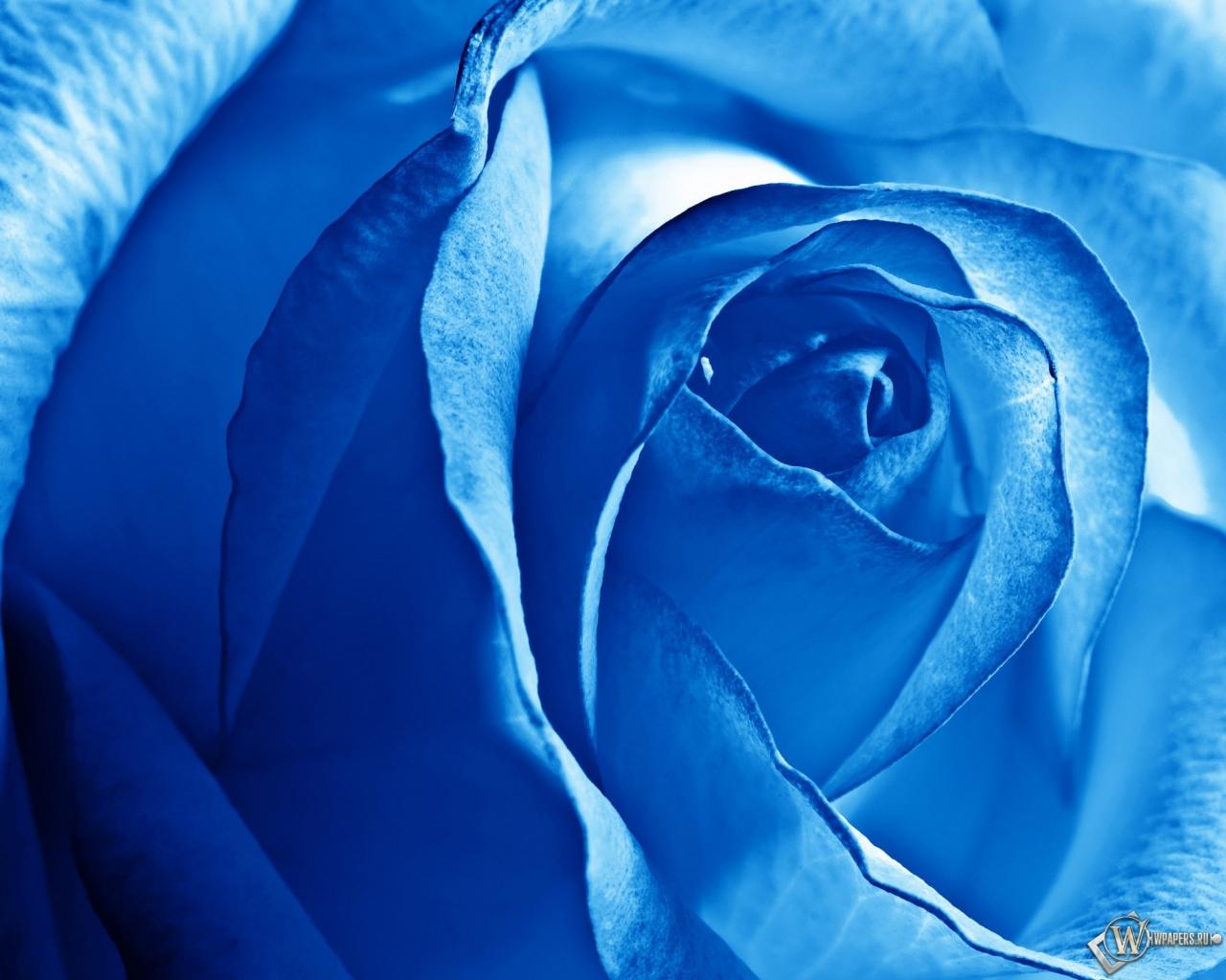 Лепестки синий цветы 1280x1024 картинки